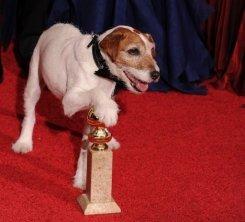 Purebred Breeders reviews Oscar dog