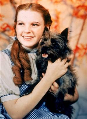 Purebred Breeders Wizard of Oz Toto Kansas