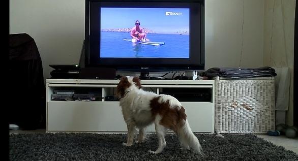 Purebred Breeders LLC DOG TV