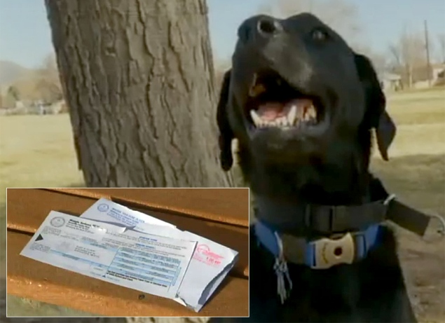 Purebred Breeders LLC Black Lab Voter Registration
