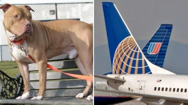 Purebred Breeders united airlines ban