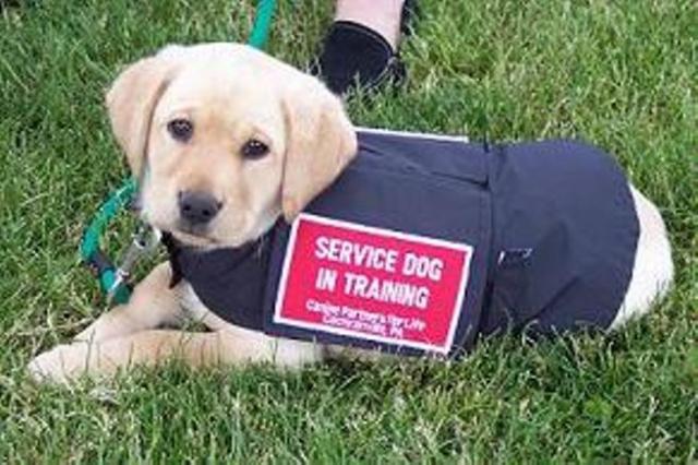 Purebredbreeders.com service dog