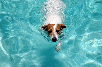 Dog summer water safety Purebredbreeders.com reviews