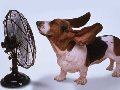 Purebred Breeders dog summer temperature