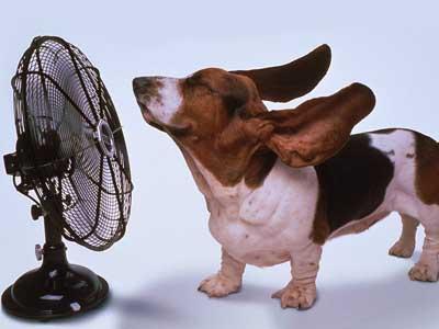 Purebred Breeders dog summer temperature